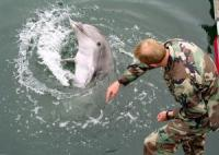 Ukraine Resumes Training of Combatant Dolphins